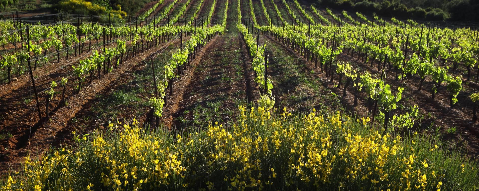 Vineyards ©G.Souche