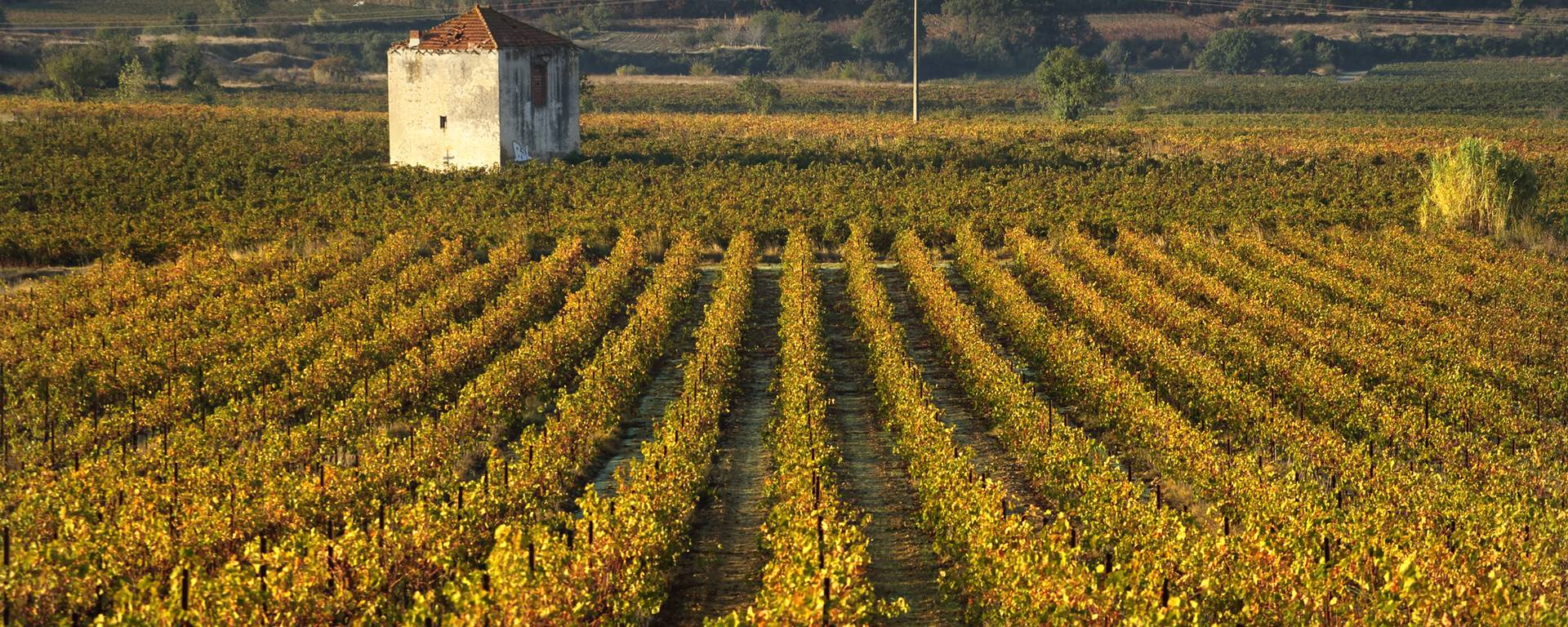 Storehouse and vines in the Côtes de Thongue ©G.Souche