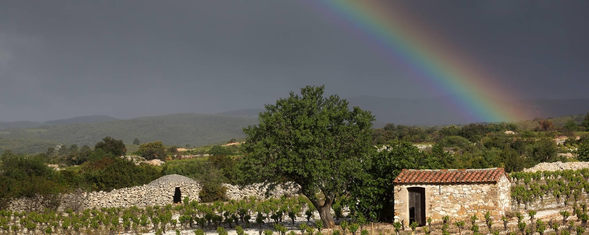 Paysage viticole Pays d'Art et d'Histoire Haut Languedoc et Vignobles