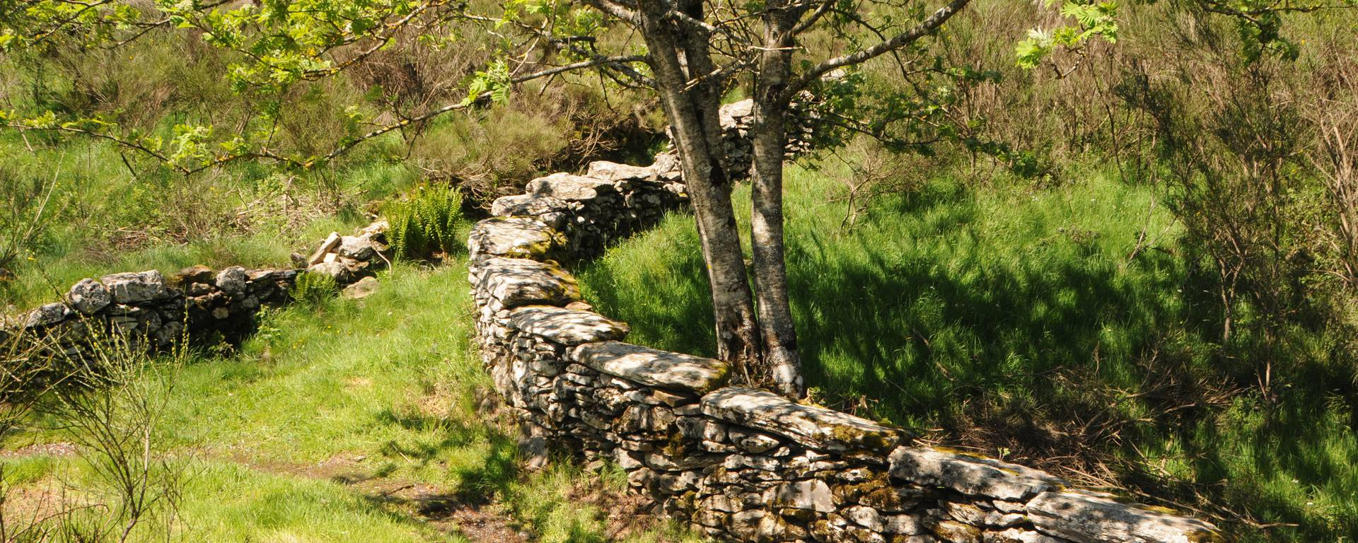 A grassy path along a dry stone wall