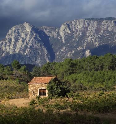 The Berlou vineyards