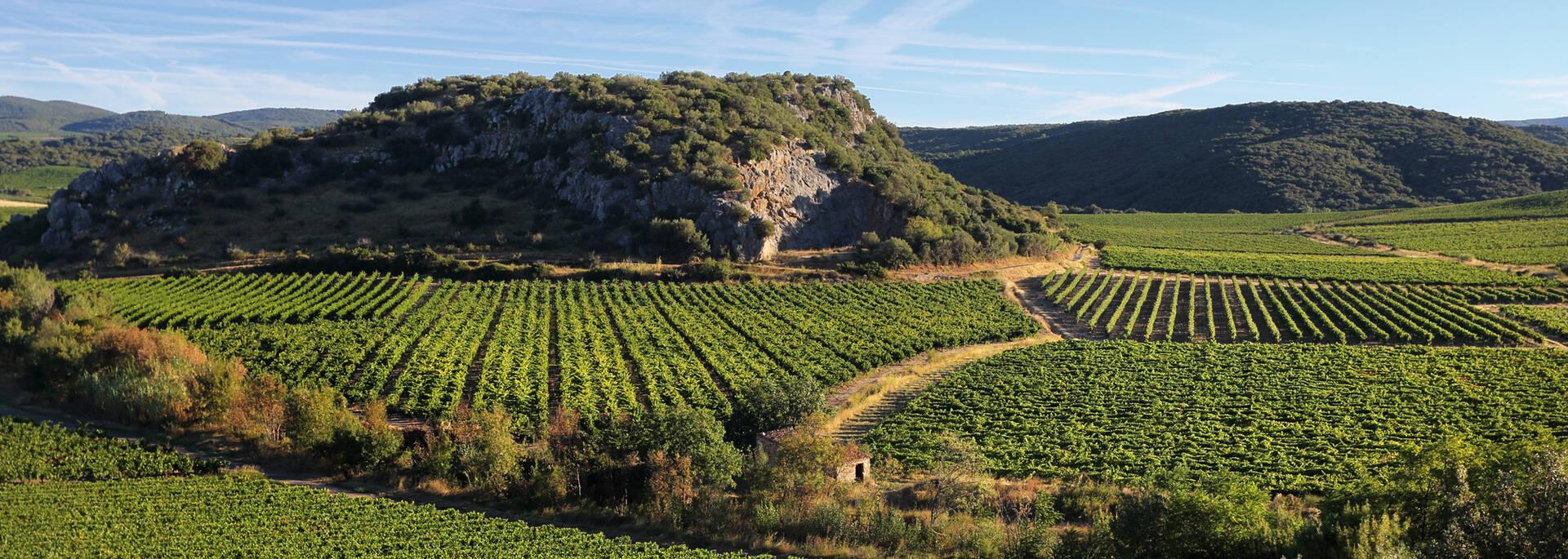 Vineyards in the Haut Languedoc et Vignobles