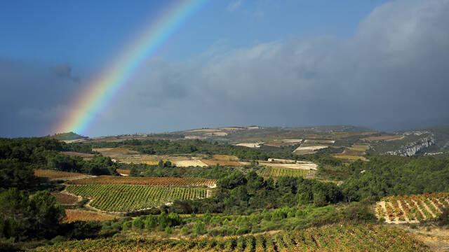 Vignobles du Minervois au printemps ©G. Souche
