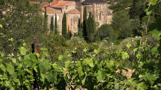 Vines and abbey at Fontcaude ©G.Souche