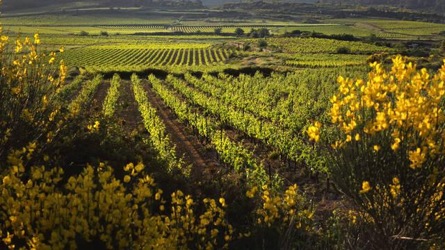 les Vignobles ©G.Souche