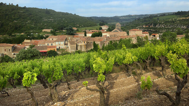 Vineyards and village of Minerve