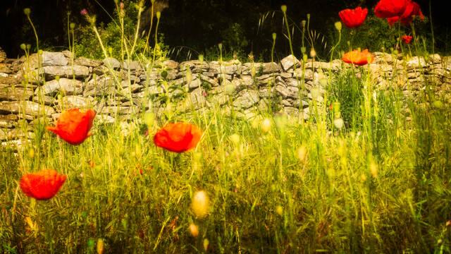 Dry stone in the Haut Languedoc et Vignobles