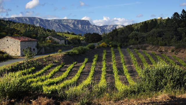 Caroux, mazet et vignes ©G.Souche