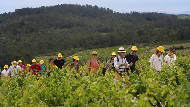 Group hiking through the vines ©Georges Souche