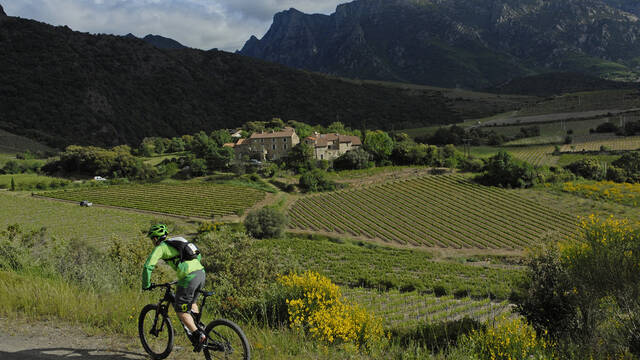 Vines, mountains and bikes ©OT Minervois au Caroux