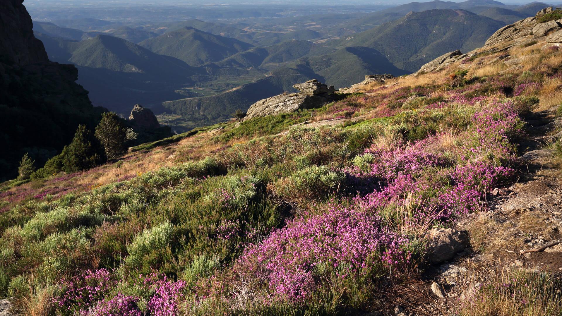 Les Montagnes et plateaux du Caroux ©G.Souche