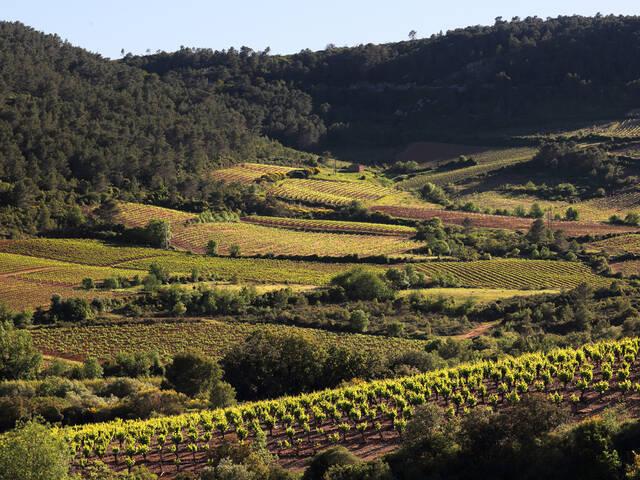 Saint-Chinian vineyard