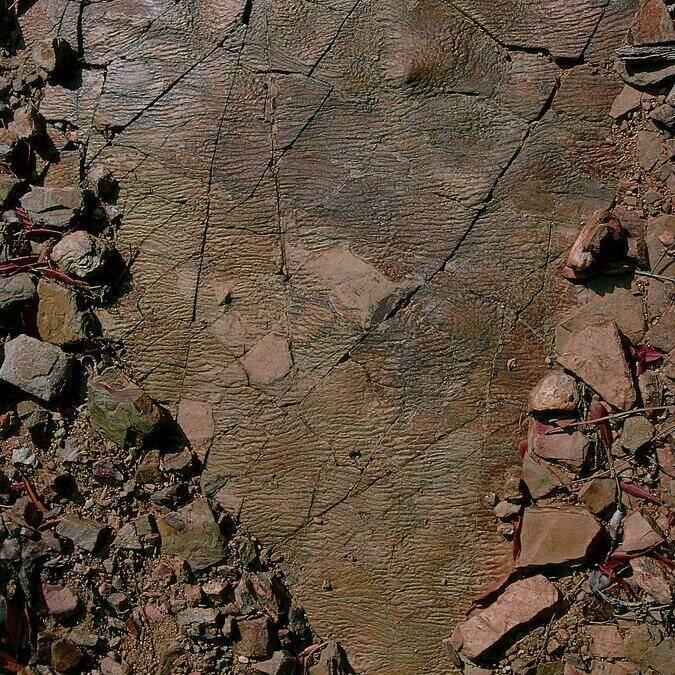 Shale, the most common rock type Pays d'Art et d'Histoire Haut Languedoc et Vignobles
