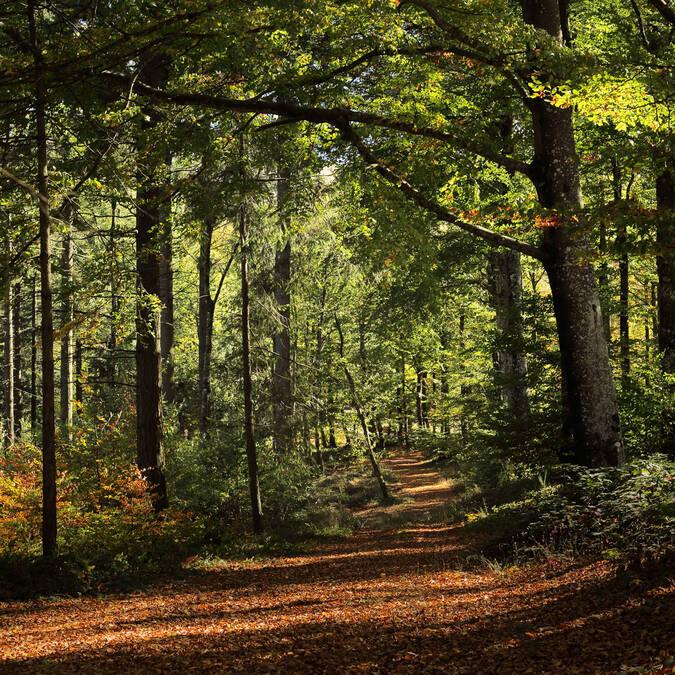 Forêt Caroux
